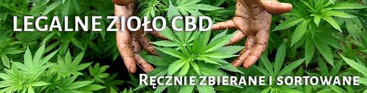zioło cbd, zioło konopi, zioło marihuany, marihuana cbd, konopia cbd, susz cbd,